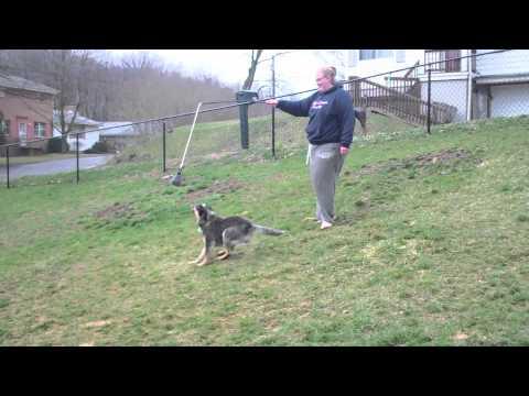 dexter--foster-dog