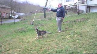 Dexter--foster Dog