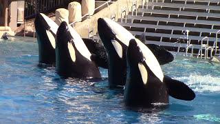 One Ocean (Full Show) at SeaWorld San Diego 10/25/16