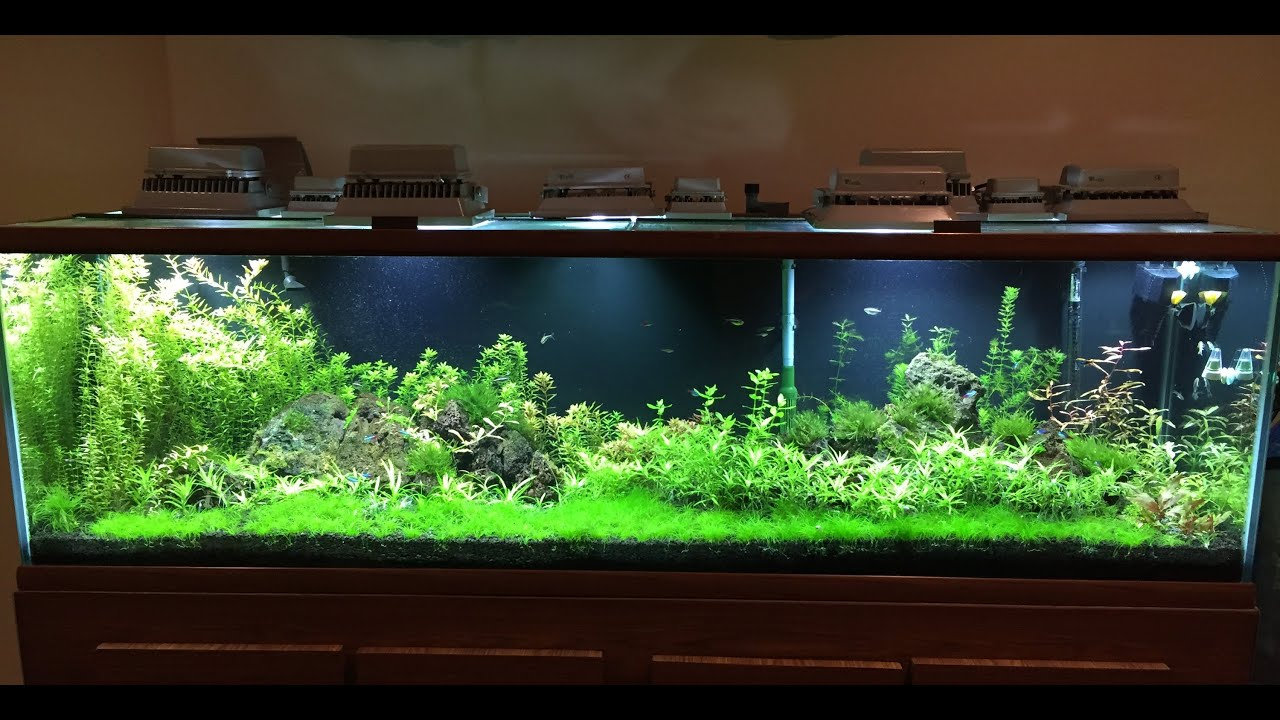 110 Gallon Fully Planted Aquarium Week 6 7 Youtube