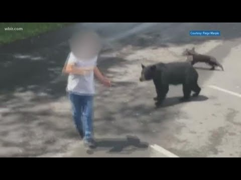 None - Man Confronts Mama Bear and Cubs, Not a Good Idea