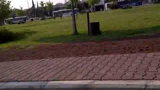 Türbanlının Park Kacamagı