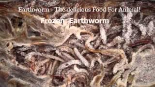 Earthworm Farm In Vietnam