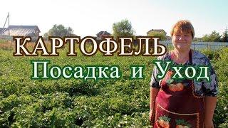 Выращивание картофеля.(27.06.16 г.)