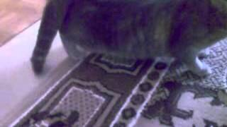 Кошка хочет кота!