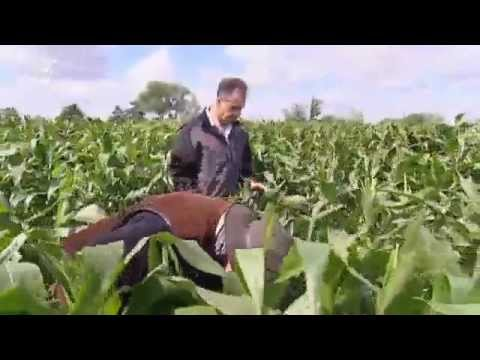 Certifying Organic Food in Germany | Made in Germany