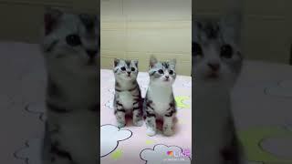 Cute cat 🐱