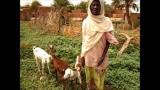 Distribution de chèvres au Niger
