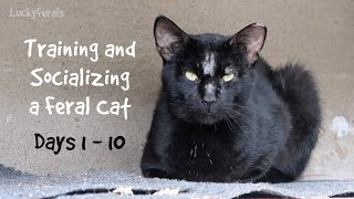 Training And Socializing A Feral Cat  Days 1  10  Compilation Boo Day Videos