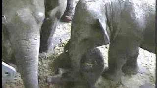 Zoo Video Tour of Lowry Park Zoo in Tampa, Florida: Baby elephant & much more