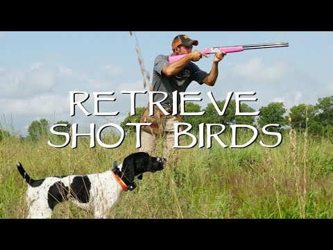 Retrieving Shot Birds - Upland Bird Dog Training