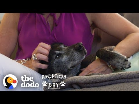 Watch An Old, Sad Dog Turn Into The Happiest Puppy In His Forever Home | The Dodo Adoption Day