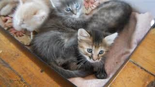 2018 09 18 котята на даче Joined