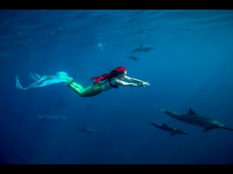 Ariel the Little Mermaid Swims With Dolphins