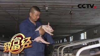 《致富经》 20200612 一只手撑起的财富人生| CCTV农业