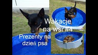 Pieski wchodzą do basenu i haul na dzień psa