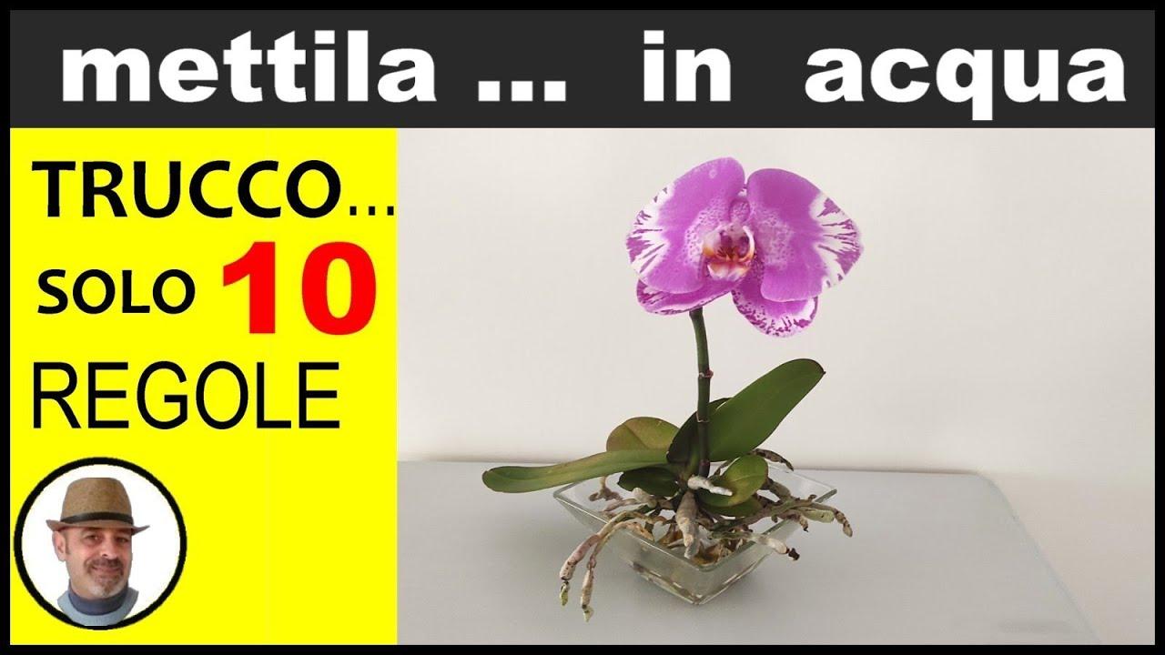 Download ORCHIDEA, COME COLTIVARLA IN ACQUA (growing orchid in water, cultivo de orquídeas en el agua)