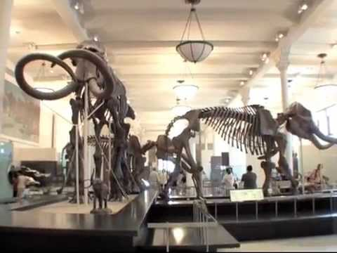 American Museum of Natural History in New York Dinosaur film