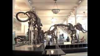 American Museum of Natural History in New York Dinosaur film (better resolution 2013)
