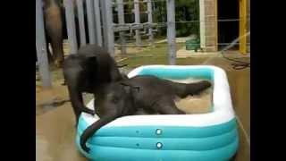 Słonie w basenie