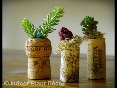 easy indoor plants - easy indoor plants to grow - YouTube