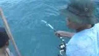 Mancing Ikan Gabus Laut (Pantasik) 25 kg...