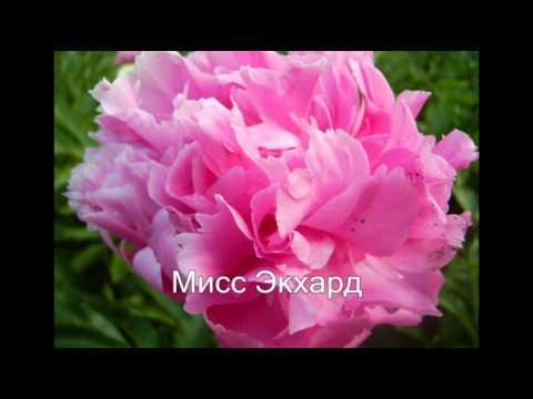 10 самых НЕПРИХОТЛИВЫХ комнатных растений или Цветы для лентяев ❖❖❖ Фото и названия