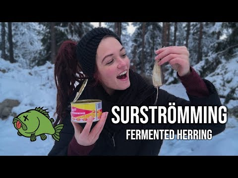Eating Rotten Fish // Surströmming // Swedish Gourmet Food