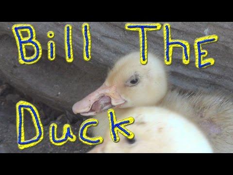 Goose Lee R.I.P. #108 Ducks For The Homeless