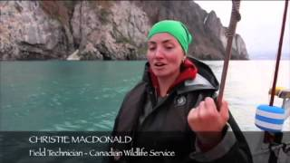 Arctic Tern I: 2014 Season