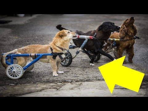 This Animal Hospital Gives A Wheelchair To Every Dog Who Needs One
