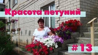 видео Лилии - залог пышного цветения