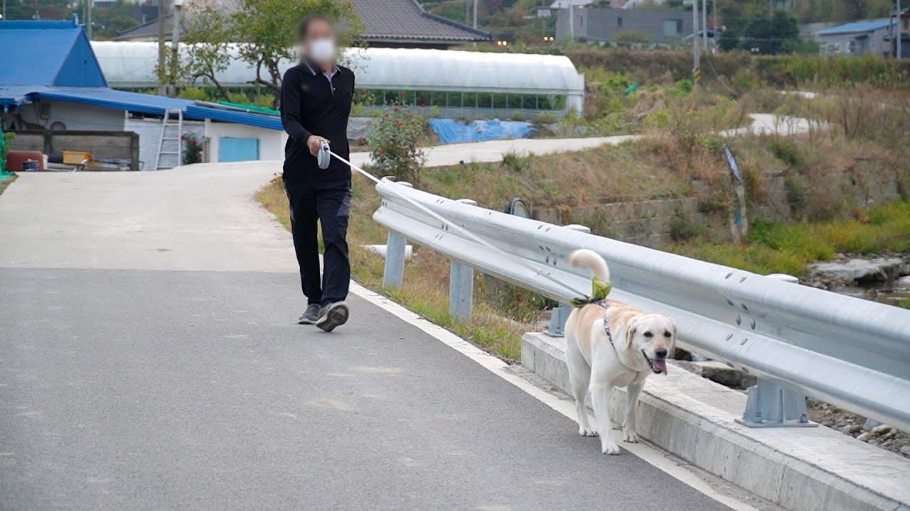 강아지와 산책을 처음하는 아빠 | Dad walks puppy for the first time