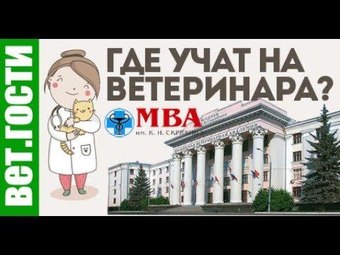 Вопрос: Какой самый лучший ветеринар в Москве?