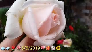 الحديقة المنزلية جميلة beautiful garden گوڵی جوان 5/5/2019