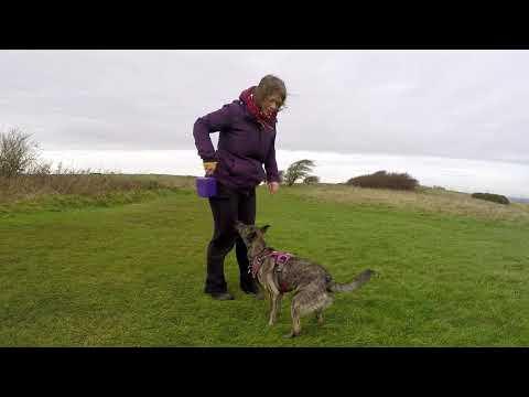 Trick Dog Ninja with Bea