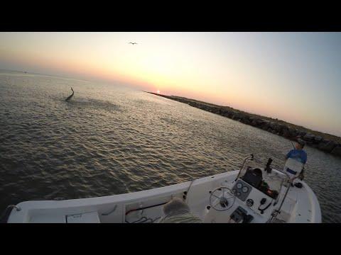 TARPON And SHARKS CRUSHING MEGA School Of FISH. Fishing The Mullet Run! Ft.The North Florida Angler