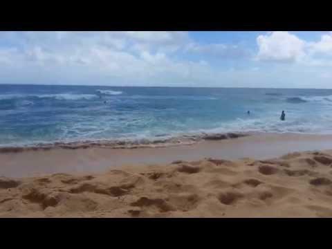 Hawaiian Monk Seal Playing at Sandy Beach Hawaii