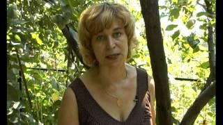 видео Урожай сливы в Вашем саду