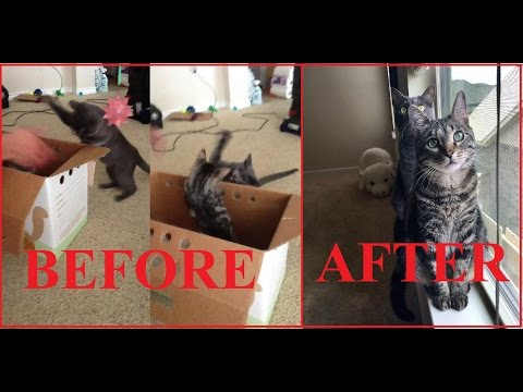 Cat introduction gone wrong --- what not to do!