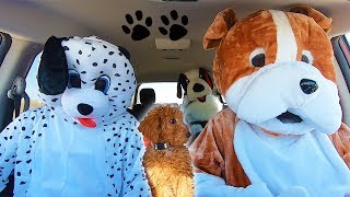 Dogs Surprise Zoey With Dancing Car Ride!