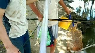 Mấy ae bắt cua cá mùa nước nổi, chén mồi ngon thôi