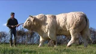 Yonne : le taureau Holiday remporte le Grand Prix au Salon de l'agriculture