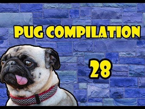Pug Compilation 28 – Funny Dogs Compilation 2018 | Best Funny Dog Videos Ever