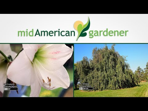 Mid-American Gardener with Sandy Mason November 2, 2017