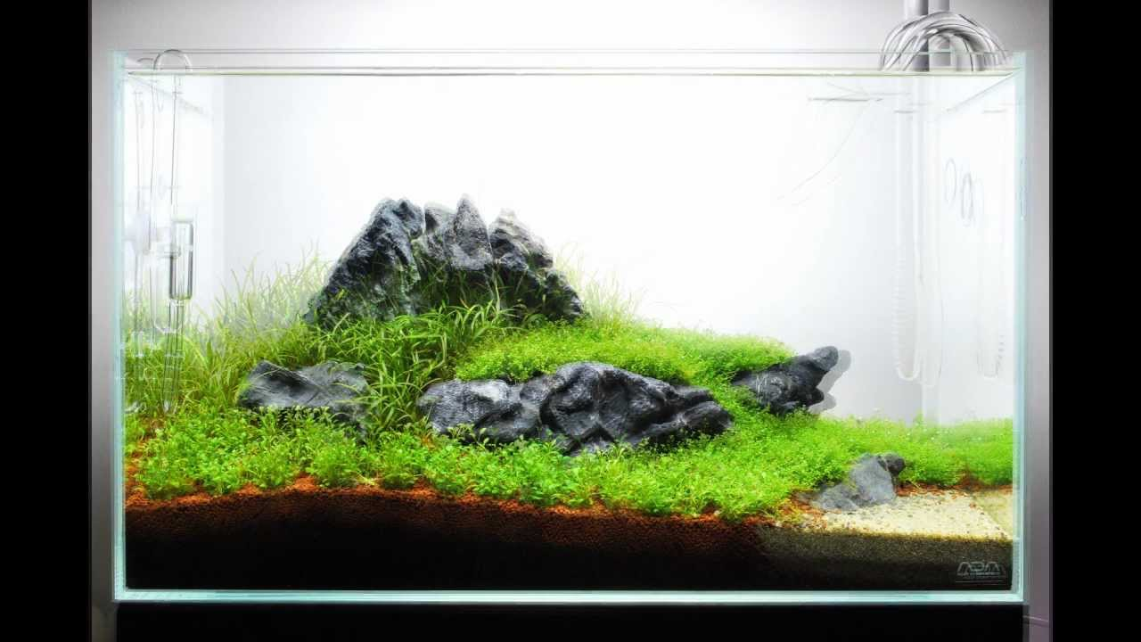 The Power Of Ada 60 P Nature Aquarium Youtube
