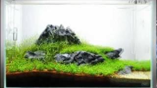 The Power Of Ada - 60-p Nature Aquarium