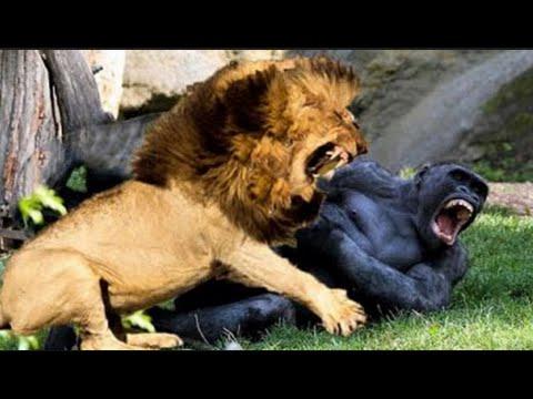 Lion's Documentary - Documentary Films