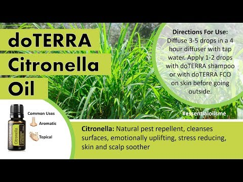 Splendid doTERRA Citronella Essential Oil Benefits And Uses