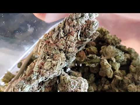 Amsterdam Coffeeshop Tour Feb 2019  Part 2 - Green House Buds And Bagheera Bongs